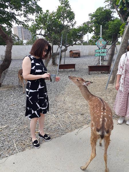 小麗小姐 墾丁包車旅遊-鹿境梅花鹿生態園區